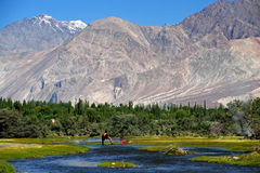 Leh, India Stock Image