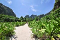 玛雅人海湾发埃发埃Leh海岛, Krabi泰国,亚洲密林  免版税库存照片
