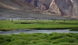 Leh, Ladakh, India. Beautiful scenic view in Leh, Ladakh, India Stock Photos