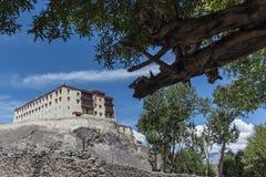 Leh slott och skäll av ett träd Arkivfoto