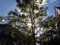 Lehman Dudley House est parti et droit de Straus Hall, yard de Harvard, Université d'Harvard, Cambridge, le Massachusetts, Etats- Photographie stock libre de droits