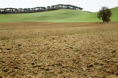 Lehmbodenfeld mit grünem Hintergrund in Toskana Stockfoto