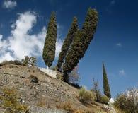 Lehnende Bäume Lizenzfreies Stockbild