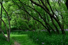 Lehnende Bäume Stockfotos