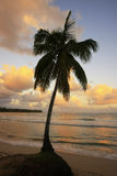 Lehnende Palme bei Las Terrenas setzen bei Sonnenuntergang, Samana-penins auf den Strand Stockfotografie