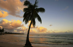 Lehnende Palme bei Las Terrenas setzen bei Sonnenuntergang, Samana-penins auf den Strand Lizenzfreie Stockfotografie