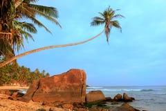 Lehnende Palme mit großen Felsen, Unawatuna-Strand, Sri Lanka Stockfoto