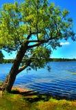 Lehnender Baum Stockfoto
