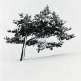 Lehnender Baum Stockfotos