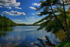 Lehnender Baum durch einen See stockbild