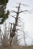 Lehnender Baum im Holz Lizenzfreie Stockbilder