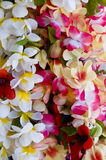 Lei Royalty Free Stock Photography