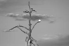 Lei che tiene la luna Fotografia Stock Libera da Diritti