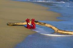lei driftwood стоковое изображение