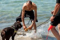 Leibwächterhunde und -lehrer am Strand Lizenzfreies Stockbild