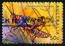 Leichhardts Grasshopper Australian Postage Stamp. AUSTRALIA - CIRCA 2003: A used postage stamp from Australia, depicting an illustration of Leichhardts Stock Images