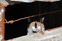 Leicht-äugige Streukatze, die im Keller sich versteckt lizenzfreie stockfotografie