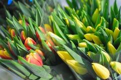Leicht gelbe Tulpen auf einem blauen Hintergrund lizenzfreie stockbilder