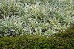 Leicht purpurrote Blume und bracketplant Lizenzfreie Stockbilder