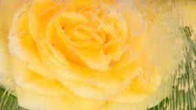 Leichte Abstraktion mit einer gelben Rose Stockfotos