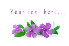 Leichte Blumen auf einem weißen Hintergrund Stockbild