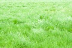 Leichte Brise auf einem Wiesengebiet Stockfotos