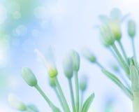 Leichte Frühlingsblumen Stockfotografie