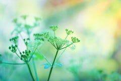 Leichte grüne Blumen Stockfotografie