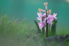Leichte wilde Frühlingsblumen Stockfoto