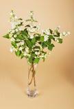 Leichte wohlriechende Blumen des Jasmins im Vase Lizenzfreie Stockfotos