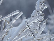 Leichter Grashalm unter Eis Stockbilder