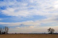 Leichter Himmel in den Pastellfarben über dem Grasland Lizenzfreie Stockfotografie