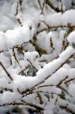 Leichter Schneesturm Stockfotos
