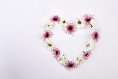 Leichtes Herz von Chrysanthemen auf einem weißen Hintergrund Stockfotos