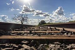 leid spoor met droge boom aan de linkerzijde en de aanplanting van suikerriet op aan het recht met zon het onder ogen zien stock foto's