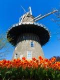 Leiden windmill. De Valk windmill with tulip inside the Leiden city, Netherlands Royalty Free Stock Photography