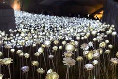 LEIDENE bloemen bij het Dongdaemun-Ontwerpplein in Seoel Stock Foto's