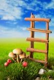 Leider en paddestoelen op mos op de weide Stock Afbeelding