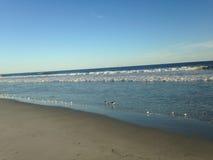 Leidingenplevier en Amerikaanse Scholekstervogels die van Grote Golven op Lido-Strand, Long Island voeden stock foto