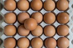 Leidingsconcept: Een ei is opmerkelijk van de groep bro Royalty-vrije Stock Fotografie