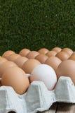 Leidingsconcept: Het witte ei is opmerkelijk van de groep  Stock Afbeelding