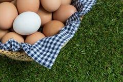 Leidingsconcept: Het witte ei is opmerkelijk van de groep  Stock Foto