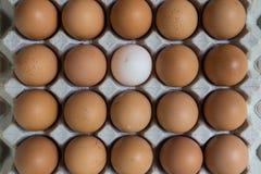 Leidingsconcept: Het witte ei is opmerkelijk van de groep  Royalty-vrije Stock Foto's