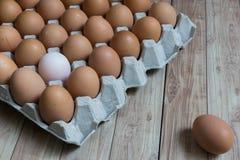 Leidingsconcept: Het witte ei is opmerkelijk van de groep  Stock Fotografie