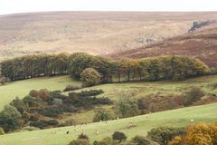 Leighon Valley, Dartmoor Stock Image