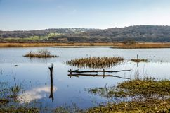Leighton Moss, Lancashire, England Stock Image