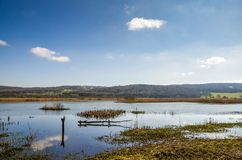 Leighton Moss RSPB, Lancashire, England Royalty Free Stock Photography