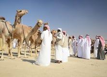Leiloeiro do camelo Imagem de Stock Royalty Free
