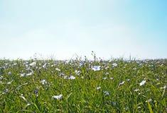 Leinenblumen, der Perche (Frankreich) Stockfoto