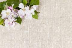 Leinenhintergrund mit Apfelblüten Lizenzfreies Stockbild